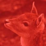 Profilbild von Die Sinnschneise