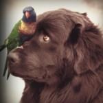 Profilbild von missdalloway