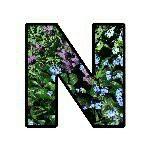 Profilbild vom Seitenautor Nestbau
