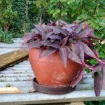 Profilbild von Gärtner*in